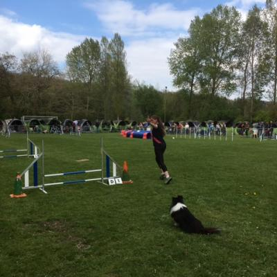 Concours agility Rollancourt le 23 avril 2017