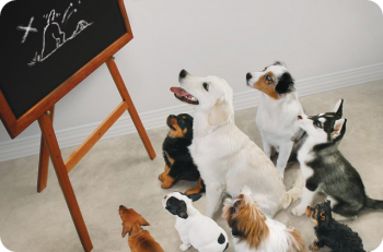 Education canine collectif