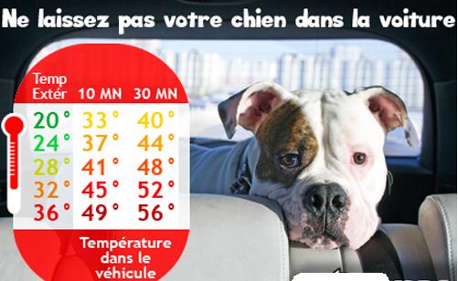 Ne laissez pas votre chien en voiture