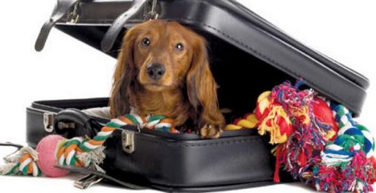 Valise du chien